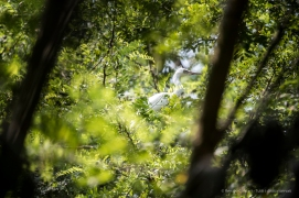 Trino Vercellese, garzetta. Nikon D750, 400mm (80-400.0mm ƒ/4.5-5.6) 1/1000 ƒ/5.6 ISO 800