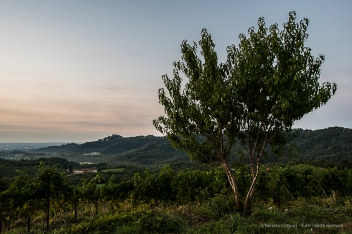 "H:07:00:10. A young cherry tree overseeing La Costa vineyard. Nikon D810, 24mm (24.0mm ƒ/1.4) 2"" ƒ/8 ISO 64"