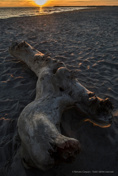 A log on the western beach at sunset. Nikon D810, 24mm (24.0mm ƒ/1.4) 1/100 sec ƒ/5.6 ISO 100