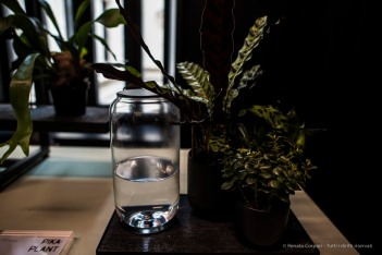 Pika Plant. Nikon D810 (24 mm ƒ/1.4) 1/100 ƒ/2.2 ISO 400