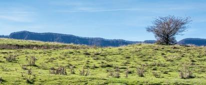 """Foreste Casentinesi. Nikon D810, 80 mm (80-400.0 mm ƒ/4.5-5.6) 1/1000"""" ƒ/8 ISO 800"""