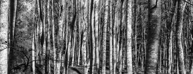 """Foreste Casentinesi. Nikon D810, 50 mm (50.0 mm ƒ/1.8) 1/80"""" ƒ/11 ISO 160"""