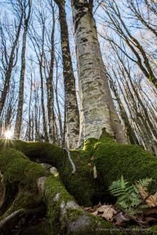 """Foreste Casentinesi. Nikon D810, 24 mm (24.0 mm ƒ/1.4) 1/125"""" ƒ/8 ISO 500"""