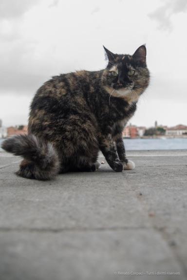 Venezia, isola della Giudecca. Nikon D810, 24 mm (24.0-120.0 mm ƒ/4) 1/50 ƒ/4 ISO 64