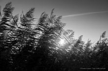 Saintes Maries de la Mere, September 2014. Nikon D810, 80 mm (80-400 mm ƒ/4.5-5.6) 1/800 ƒ/10 ISO 1000
